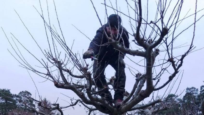 Miron uppflugen i ett äppelträd.