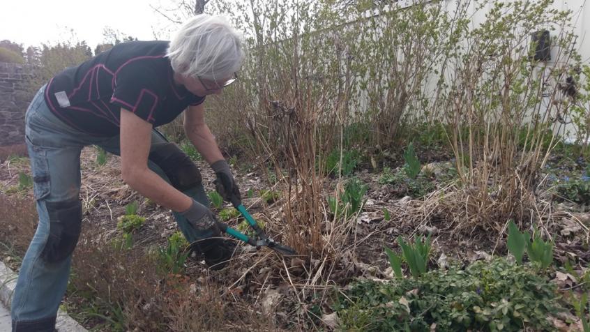 På våren behöver man klippa ned alla fjolårets vissna perenner och ta hand om och rensa upp innan det nya kommer upp.