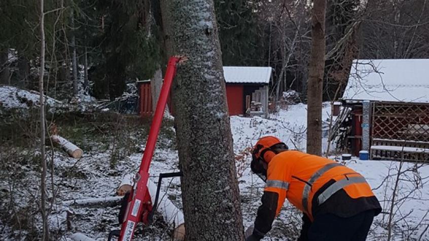 Nästa träd
