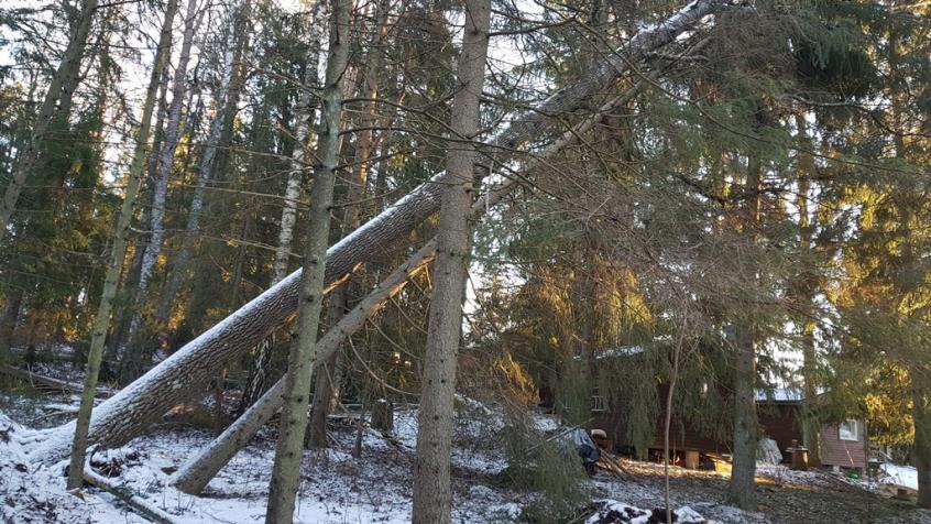 Det låg träd huller om buller