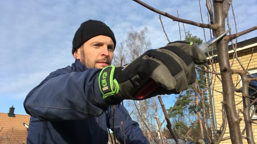 Jakob är vår skötselinstruktör och utbildar nyanställda i bland annat trädbeskärning.