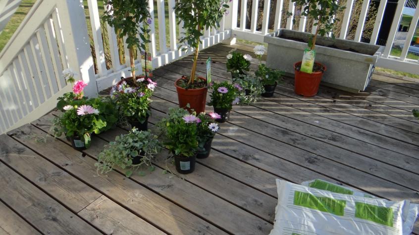 plantering av blommor