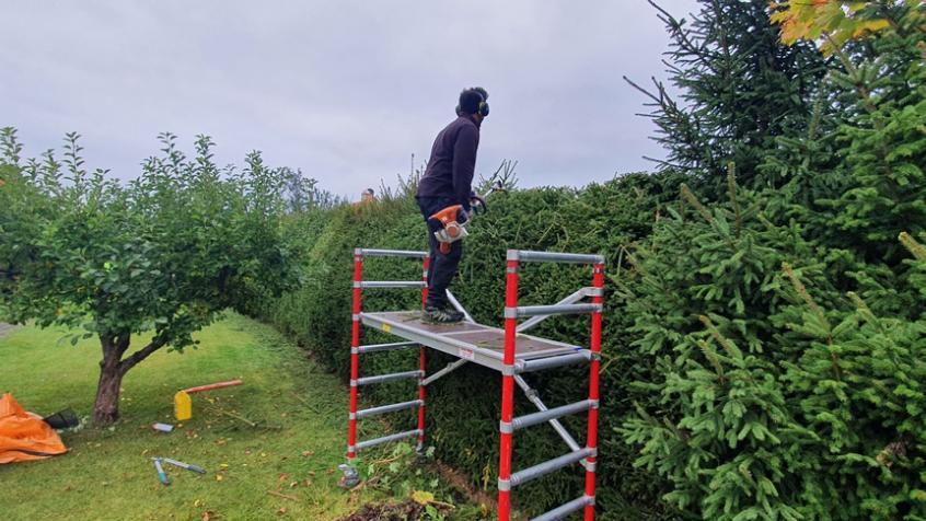 Här är Yacob uppe på byggställningen och putsar toppen på häcken.