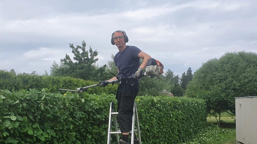 Johan putsar toppen på hagtornshäcken