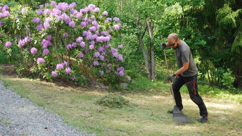 Joel räfsar gräsmattan för bästa resultat