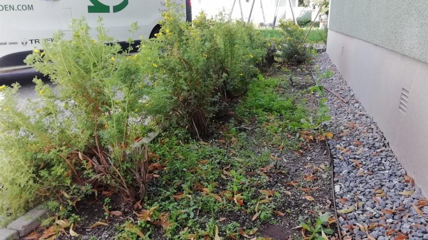 Rabatterna var slitna och trista med många döda plantor och mycket ogräs