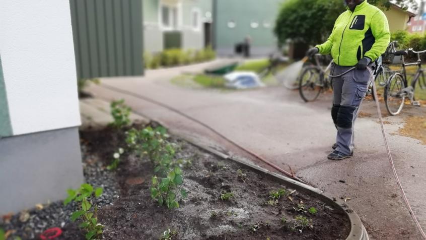 Efter att vi planterat så vattnade vi igenom allt ordentligt.