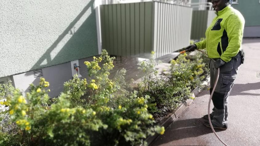 Vi skötte om bevattningen de första veckorna så att plantorna skulle etablera sig bra.