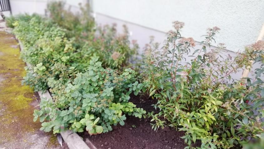 På sina ställen var det bättre men med hål där gamla plantor dött
