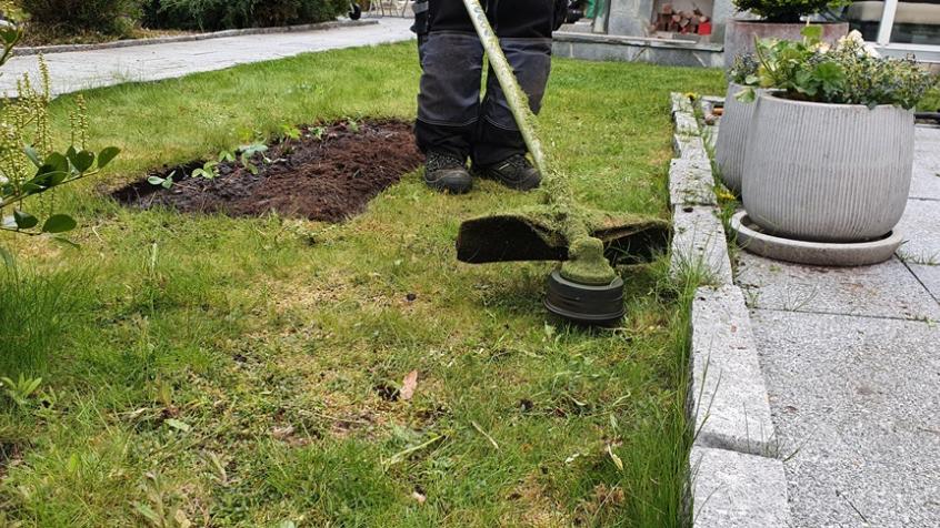 Sista touchen, maskrosorna bortrensade, rabatten återställd och jordgubbar planterade, gräset klippt och till sist så trimmar vi kanterna.