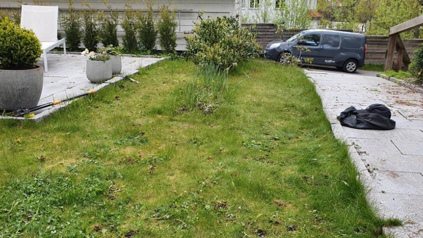 Alla maskrosor bortrensade. Här återstår att rensa fram rabatten, klippa gräset och trimma