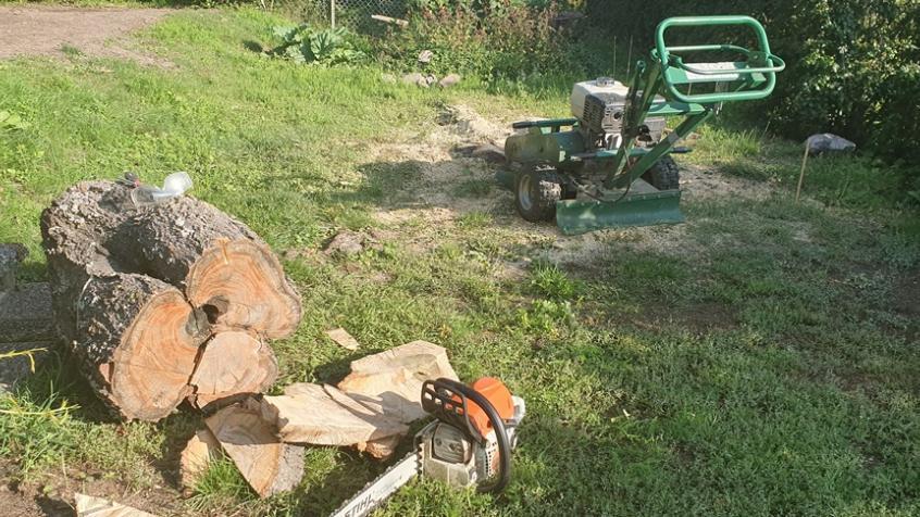 Stubben är bortsågad och vi sågade så nära marken som möjligt med motorsågen.