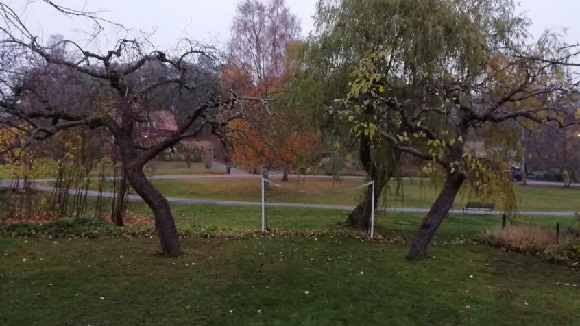 Samma träd efter beskärningen