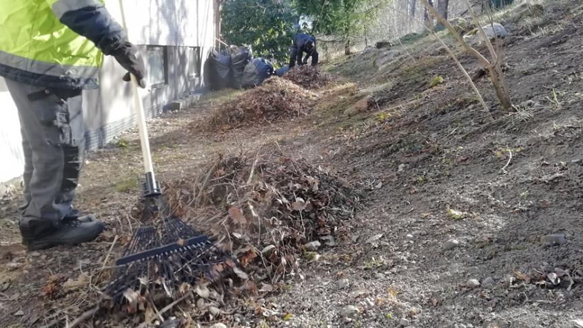 Vi räfsar löv och kvistar som fallit under vintern.