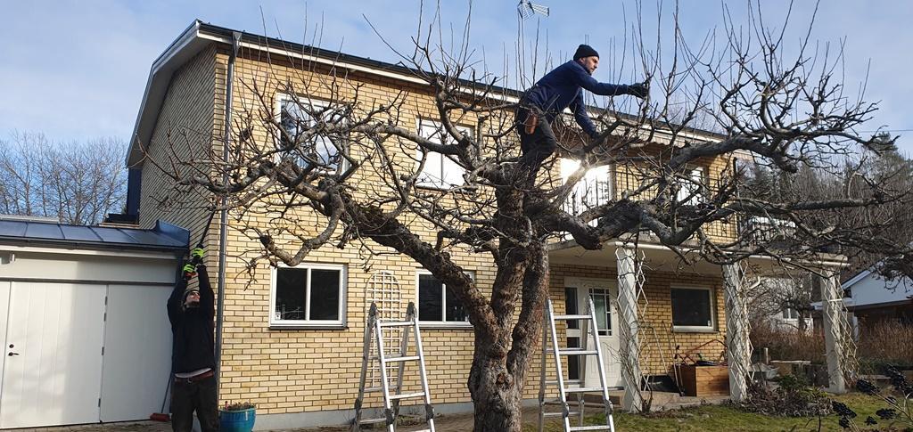 Enklast är ofta att klättra upp i trädet