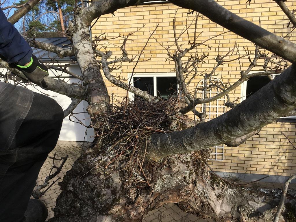 I ett av träden fanns ett fågelbo som vi lämnade kvar.