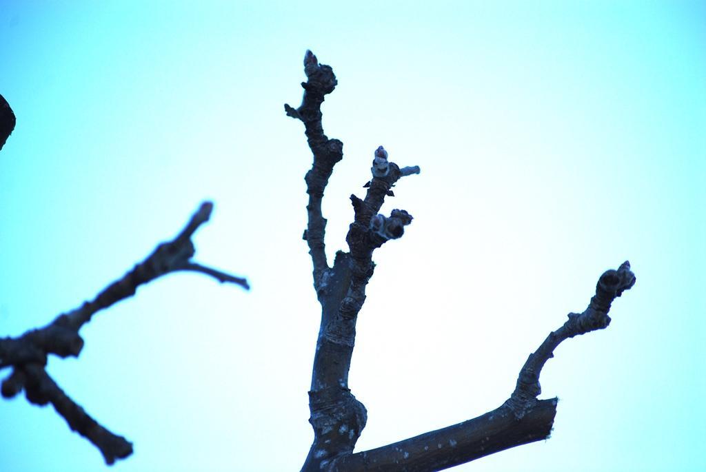 Träden är fulla med fina fruktsporrar och kommer förhoppningsvis ge bra med frukt 2019.