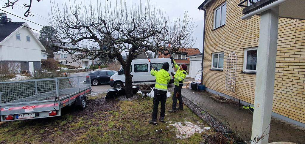Vårt mål är alltid, om inte kunden vill annat, att trädet skall ge mycket frukt.