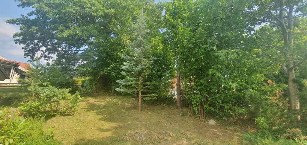 De fina barrträd och andra buskar som finns har nu lyfts fram.
