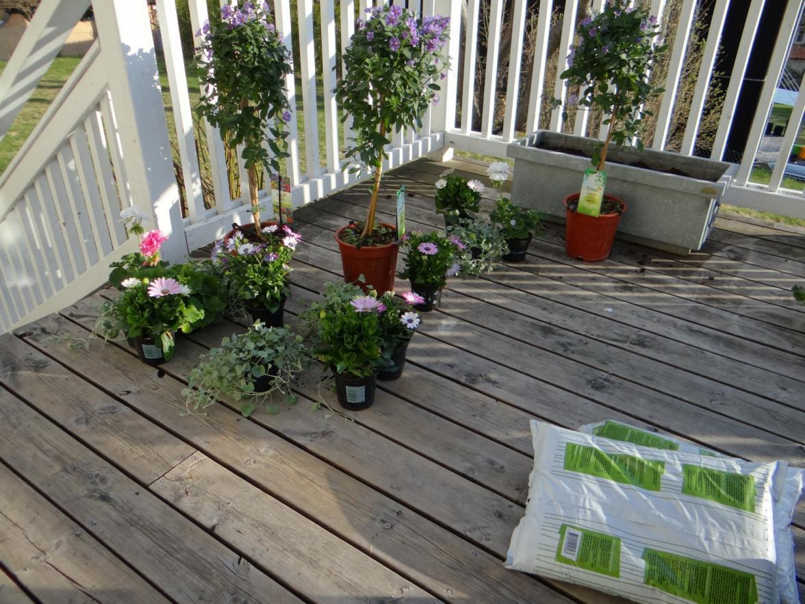 Nya blommor på plats, redo för plantering