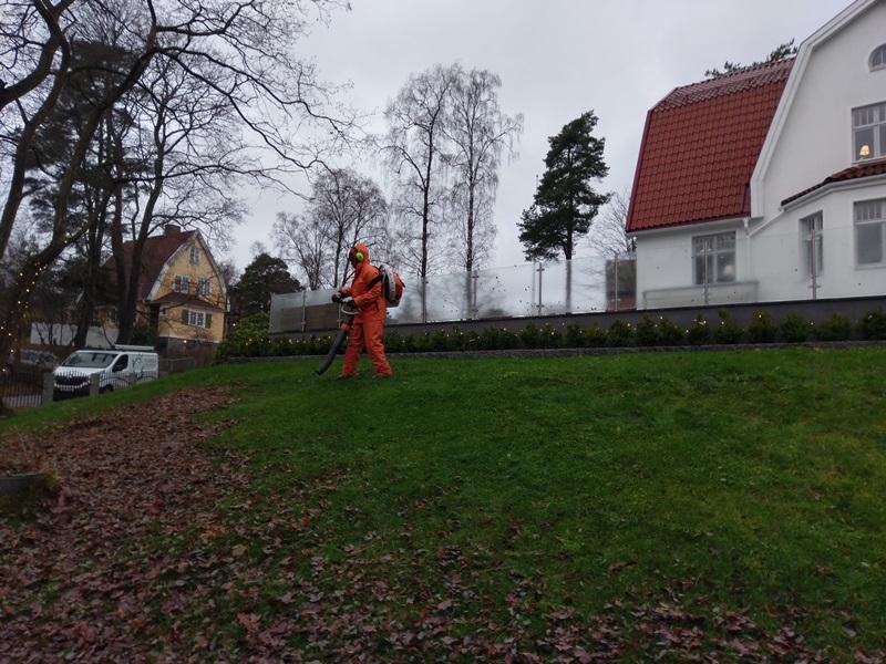 Kunden hade flera stora lövträd så det var en del att ta hand om.