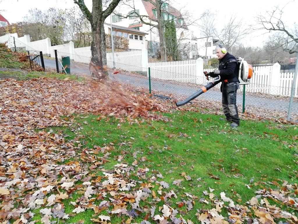 Stefan tar hand om nedre delen av trädgården där det var mycket eklöv