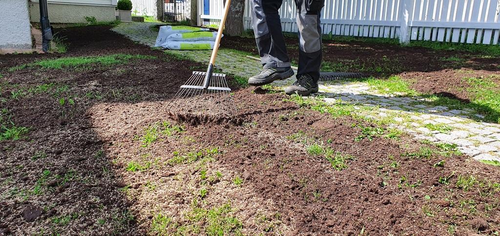Till sist använder vi en pinnräfsa för att vända ner gräsfröna i det översta jordlagret.