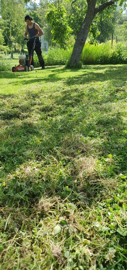 Det blir en del dött gräs och mossa som rivs upp.