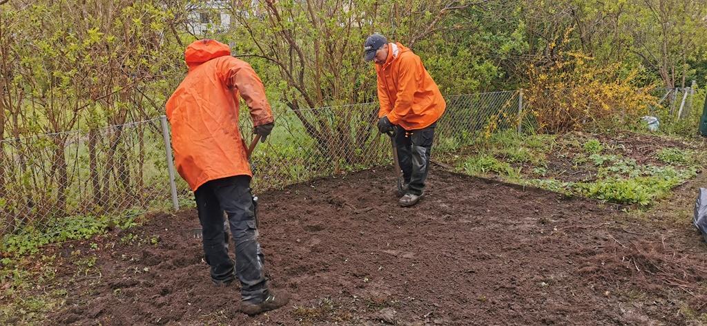 På en del ytor fick vi gräva bort gamla buskar och jämna till marken.