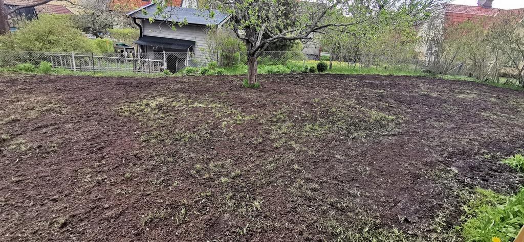 Dressjorden utspridd och vi har stödsått med gräsfrö. Nu krävs bara lite regn och lite tålamod.