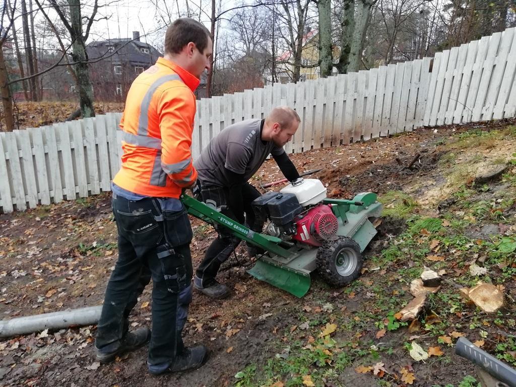 Eftersom träden växt i en slänt behövs två personer för att manövrera stubbfräsen på ett effektivt sätt.