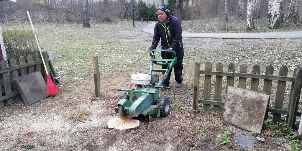 Kim kör stubbfräsningen och kör ner stubben till under marknivå.