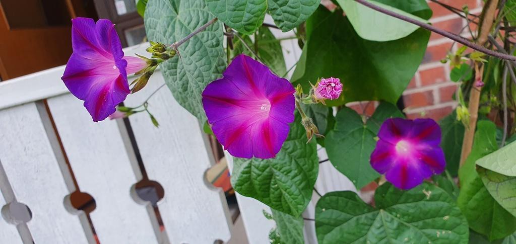 Blomman för dagen