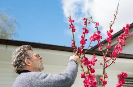 Beskära träd och buskar. ReGardens duktiga trädgårdsarbetare hjälper dig med all beskärning.
