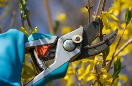 Beskärning av buskar av ReGardens duktiga trädgårdsarbetare
