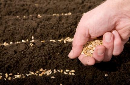 Så frön. Vårsådden går lättare om du tar hjälp. ReGardens trädgårdsarbetare hjälper dig med alla typer av trädgårdsjobb.