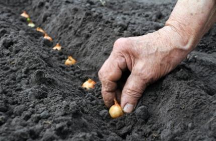 Vårsådd av lökar och sådd av frön. ReGardens trädgårdsarbetare hjälper dig.
