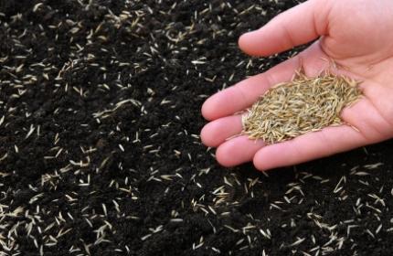 Så gräsfrön, anlägga gräsmatta. ReGardens trädgårdsarbetare hjälper dig att få ett perfekt resultat