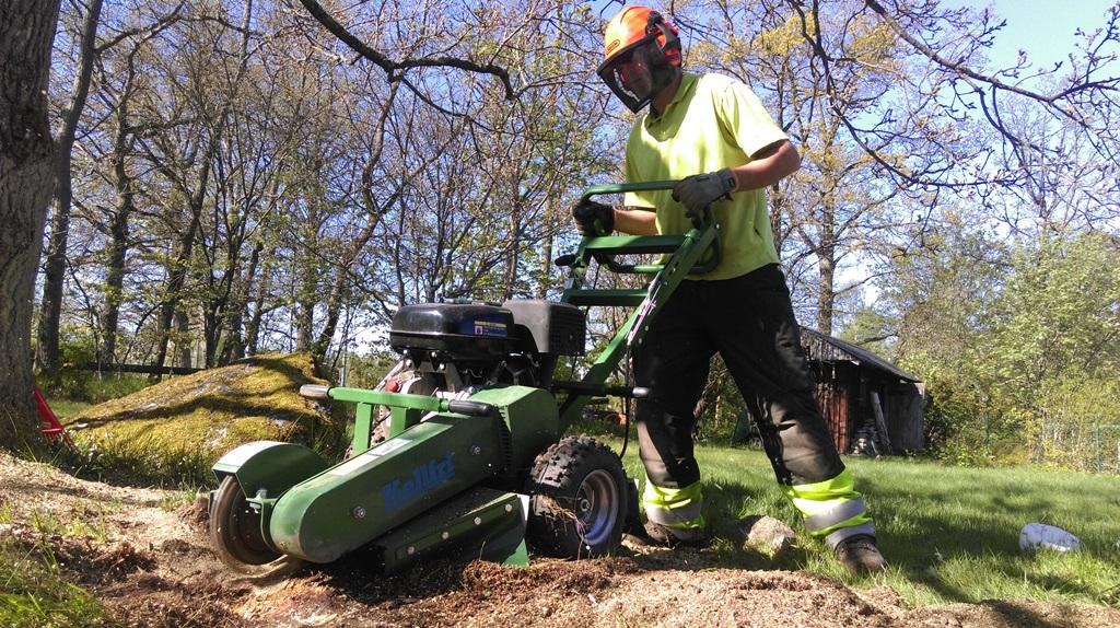 Vi fäller träd och fräser stubbar. Ring oss för en offert!