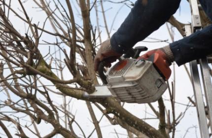 Beskära träd, trädbeskärning. ReGardens duktiga trädgårdsarbetare hjälper dig med alla beskärningsarbeten
