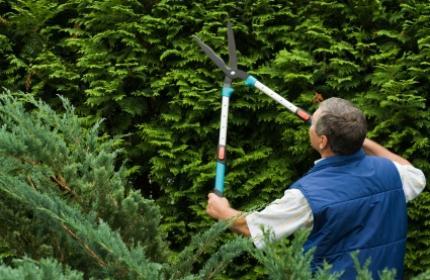 Gallra och beskära häckar. ReGardens trädgårdsarbetare fixar jobbet lätt.