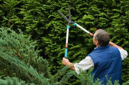 Beskära häck, häckklippning. ReGardens trädgårdsarbetare hjälper dig med alla dina trädgårdssysslor.