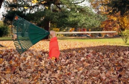 Lövkrattning, kratta löv. Låt ReGardens trädgårdsarbetare ta hand om din lövkrattning