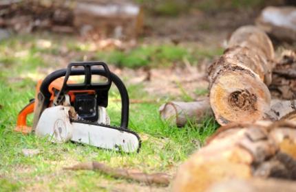 Trädfällare, trädfällning