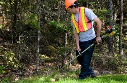 trädgårdsarbetare, trimmer, trimma gräs, sköta trädgård