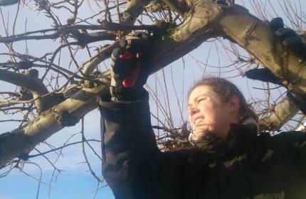 Trädbeskärning - ReGarden tar hand om era fruktträd